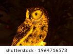 Strigiformes Bird Texture With...