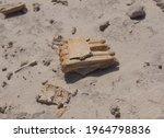 Fossilized Bovid Jaw Bone With...