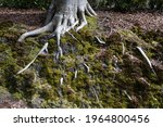 Semi Exposed Roots Of A Tree...