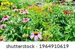 A Colorful Backyard Pollinator...