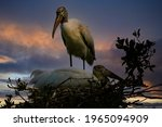 Wood Stork High In His Nest ...