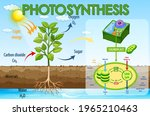 diagram showing process of... | Shutterstock .eps vector #1965210463