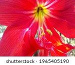 Red Flower Closeup Photo....