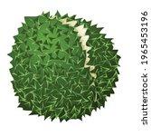 durian ripe icon. cartoon of...   Shutterstock .eps vector #1965453196