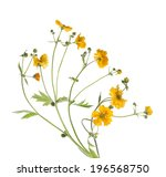 Stock photo bunch of yellow flowers isolated on white background 196568750