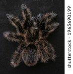 Spider Macro Many Paws Dark...