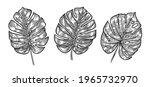 monstera tropical leaves sketch.... | Shutterstock .eps vector #1965732970
