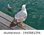 A Seagull On The Waterfront In...