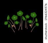 micro greens nasturtium. bunch...   Shutterstock .eps vector #1966324576