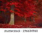 Red Trees In The Forest During...