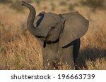 Stock photo playful elephant calf 196663739