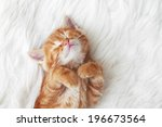 Stock photo cute little red kitten sleeps on fur white blanket 196673564