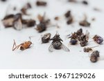 Dead dried insects from a night ...