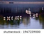 Wild Seagulls On The Lake