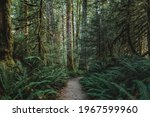 A Rocky Path  Trail Of The...