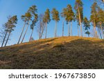 tall pine trees on the hill... | Shutterstock . vector #1967673850