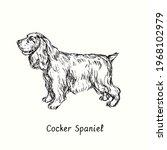 Cocker Spaniel Standing Side...