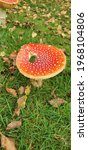 Large Toadstool Red And Orange...