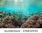 morning maldives underwater... | Shutterstock . vector #196816934