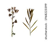 herbarium. pressed wild plants... | Shutterstock . vector #1968223399