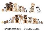 Stock photo set pets 196822688