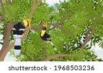a pair of great hornbill... | Shutterstock .eps vector #1968503236
