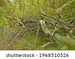 A Pile Of Tree Branches In The...