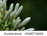 White Flower Flourishing Close...
