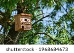 Small Wooden Shed For Birds And ...