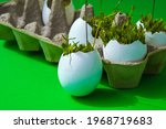 Fresh Micro Greens. Microgreens ...