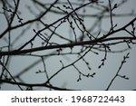 Branch Pattern. Branching Tree ...