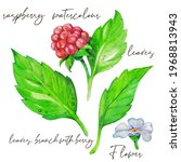 Raspberry Flower  Leaves ...