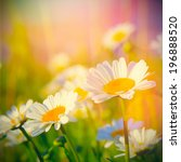 field of daisies and sunshine | Shutterstock . vector #196888520