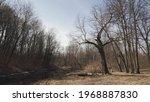 An Old Oak Tree With Broken...
