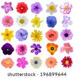 assorted gardening seasonal... | Shutterstock . vector #196899644