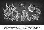bergamot orange. branch  fruits ... | Shutterstock .eps vector #1969035346