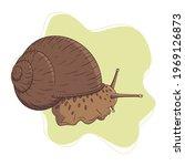Hand Drawn Garden Snail On...