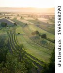 Vineyards In Burgenland In The...