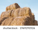 Straw In Rolls. Hay For Animal...