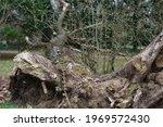 Broken Trees In The City Park...