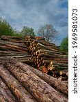 Small photo of Three piles of chopped down logs lying horizontal lengthwise