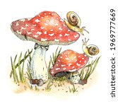 Watercolor Fly Agaric And...