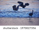 India  9 November  2020   Heron ...
