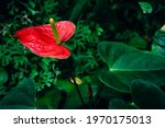 Red Heart Shaped Flower  Close...