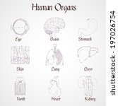human organs outline icons set... | Shutterstock . vector #197026754