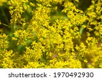 Yellow Wildflowers In Spring....