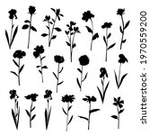 vector silhouettes of garden... | Shutterstock .eps vector #1970559200
