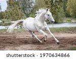 Grey Latvian Breed Horse...