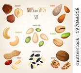 nuts and seeds mix decorative... | Shutterstock . vector #197066258