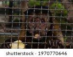 Monkey Eating Banana Inside The ...